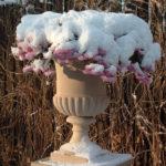 chronos-dekoracje-zima