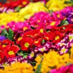 Kwiaty doogrodu