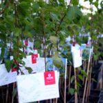 Tysiac drzew naurodziny REJS 3 m