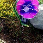 Kwiat solarny bratek
